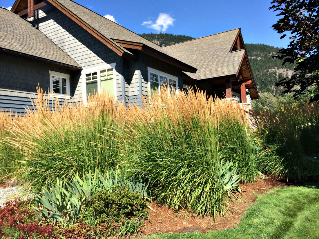 super natural landscapes karl forester feather reed grass whistler pemberton plants perennials